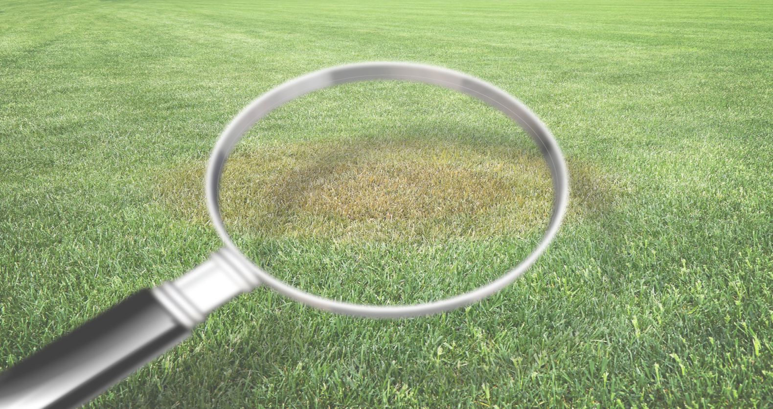 Fall Turfgrass Disease